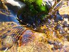 Formas del agua