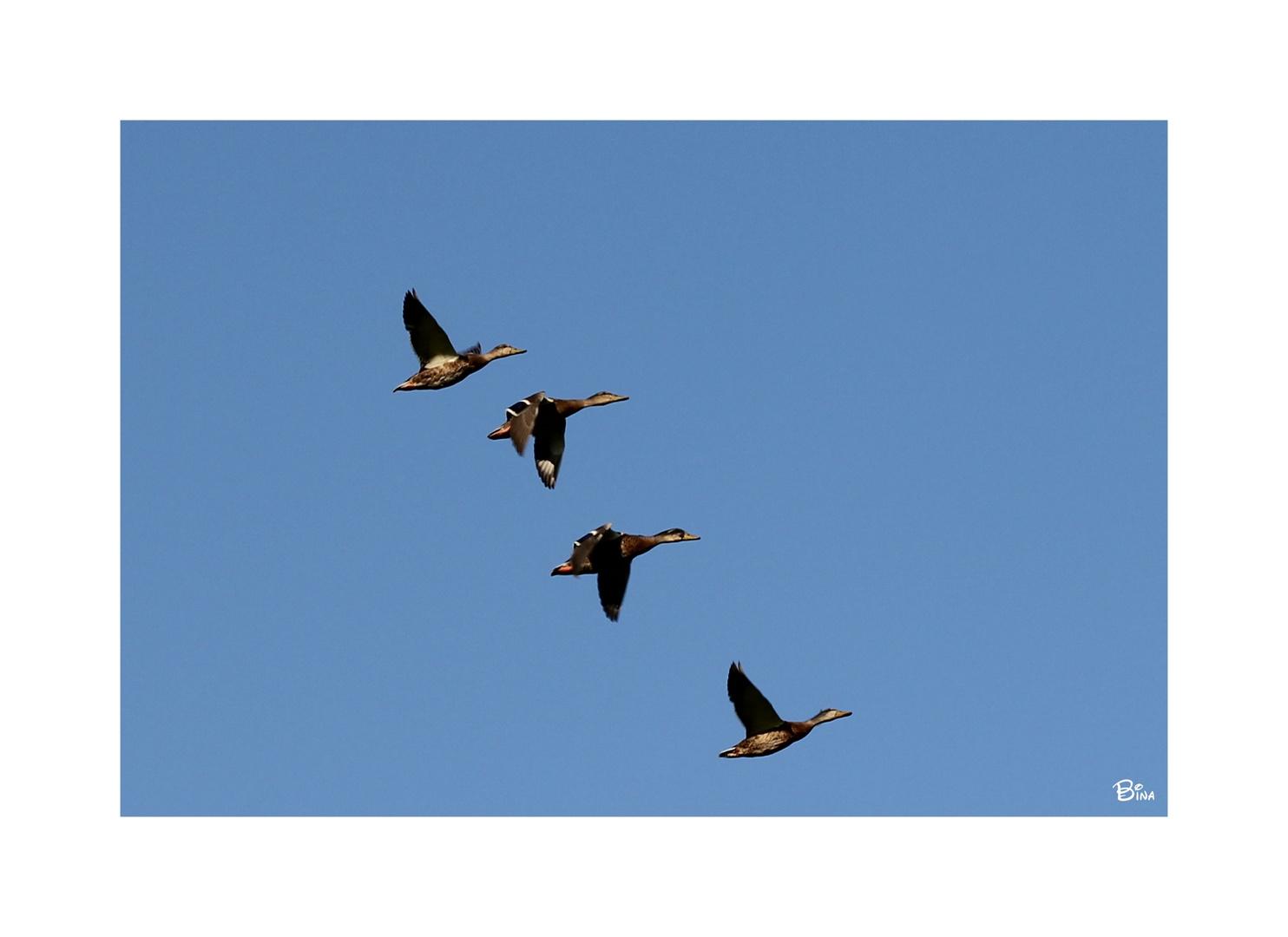 Formationsflug... oder Fluglehrgang