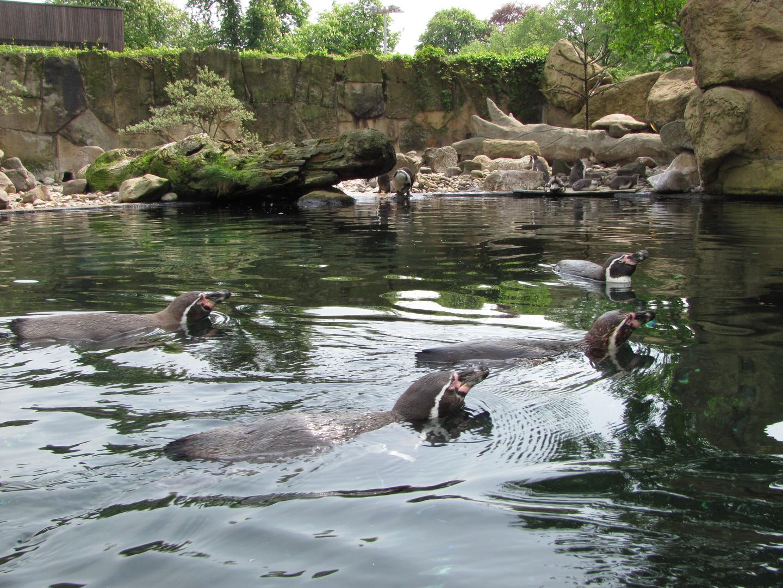 Formationsschwimmen