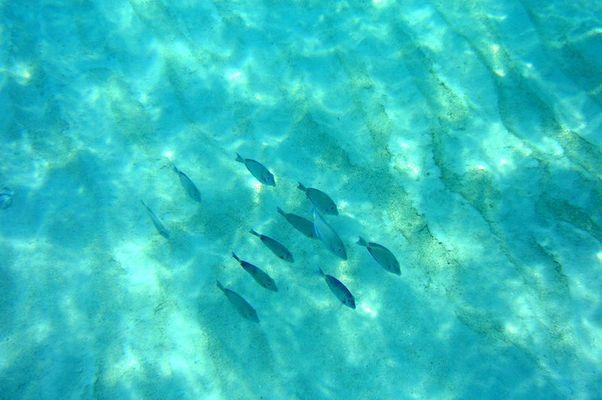 Formationsschwimmen (im Atlantik)