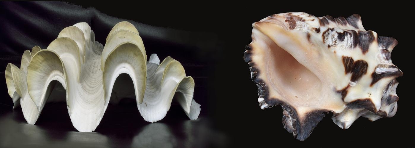 Formen aus dem Meer