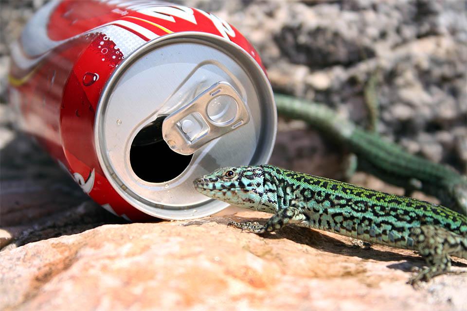 Formentera Ur-Einwohner meets Coke