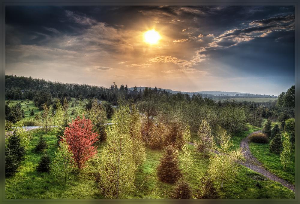 Forstbotanischer Garten Tharandt / Sächsisches Landesarboretum