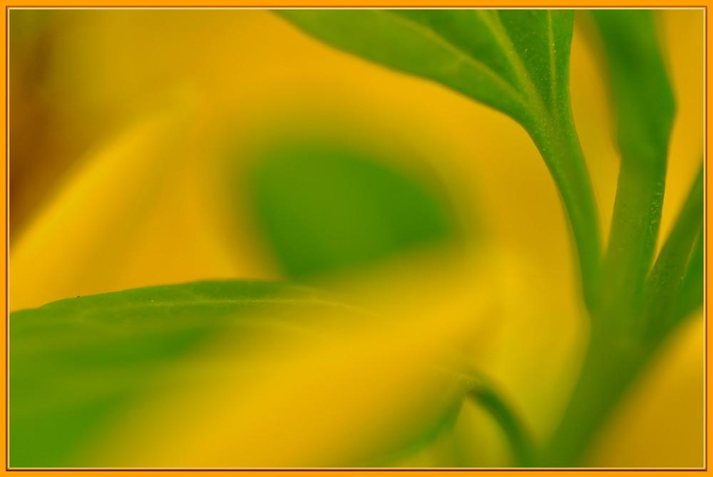 Forsythia - macro de printemps
