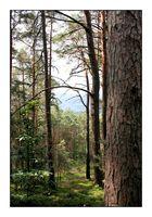 Forêt alsacienne