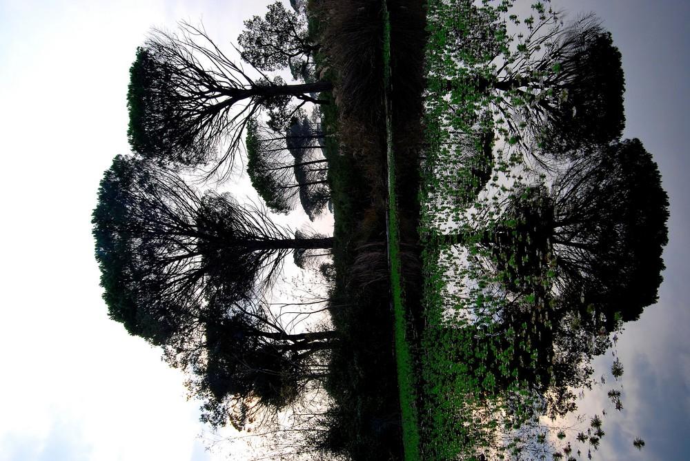 Forêt Aquatique