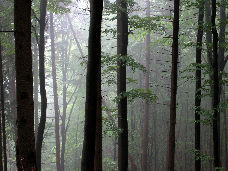 Forêt au printemps dans les Vosges du Nord