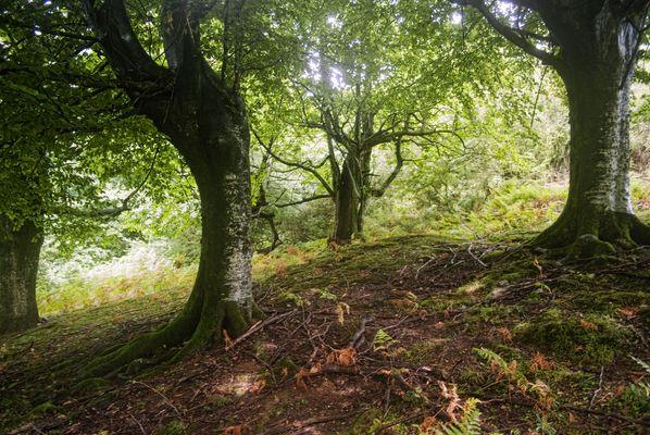 Forêt Basque