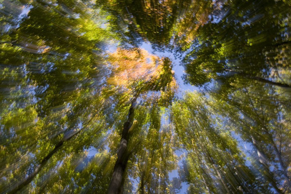 Forêt Boréal