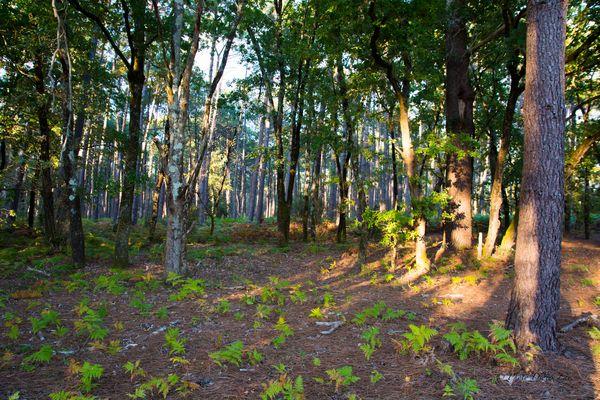 forêt d'Andernos