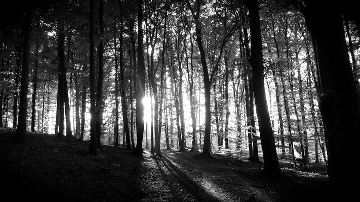 Forêt dans la lumière...