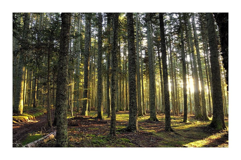Forêt d'automne au dernière lueur du jour