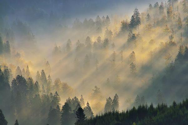 Forêt d'automne VIII ou Altweibersommer