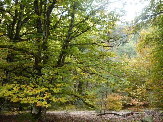 Forêt de Haute Loire