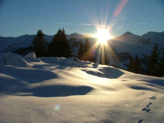 Forêt de la Loy - Vallée des Belleville - Savoie