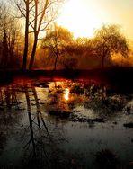 Forêt de Lancin ( 2 )