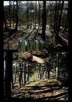 Forêt de résineux
