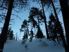 Forêt de Sognsvann