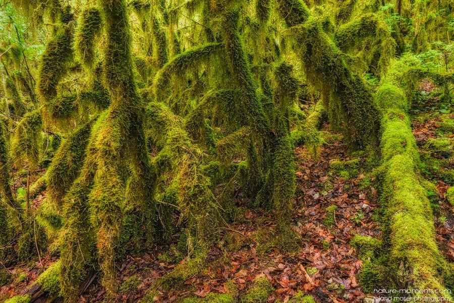 Forêt des Fees