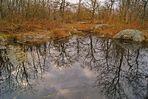 Forêt des Grands Avaux, Essonne