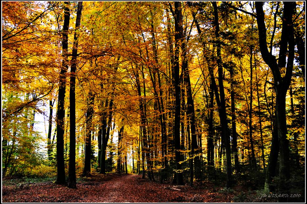 ....Forêt dOr ée !....