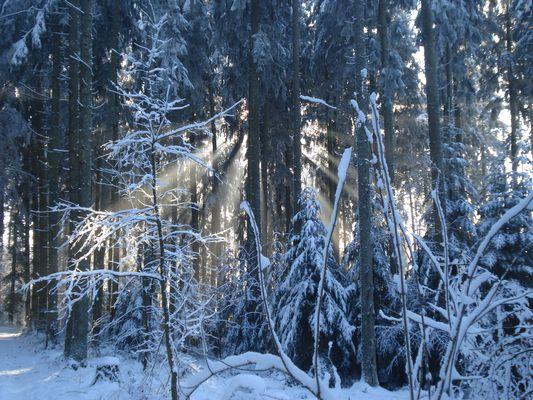 Forêt du Chalet-à-Gobet 3