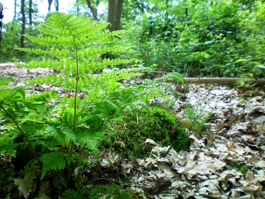 Forêt du Petit Peuple