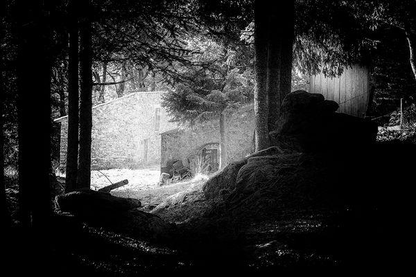 Forêt du plateau ardéchois.