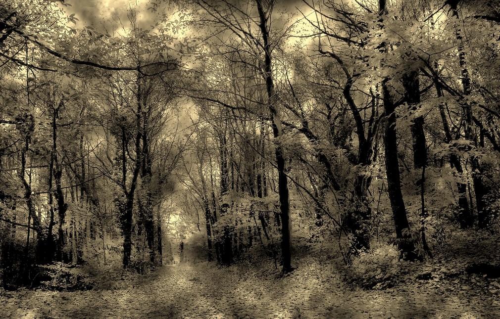 Forêt forêve forever