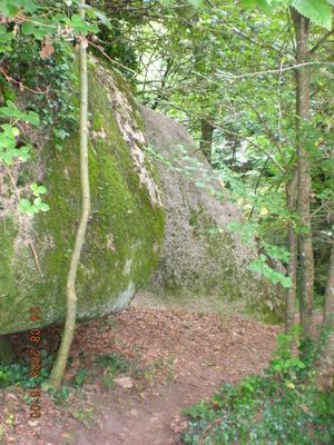 Forêt magique en Bretagne