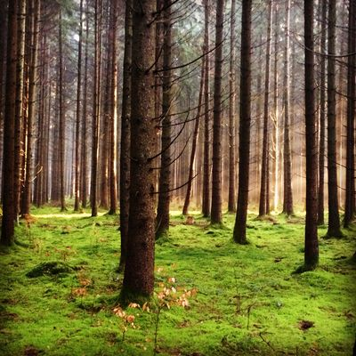 forêt Munich