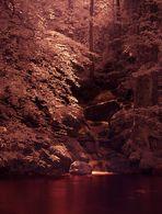 forêt mystique-2