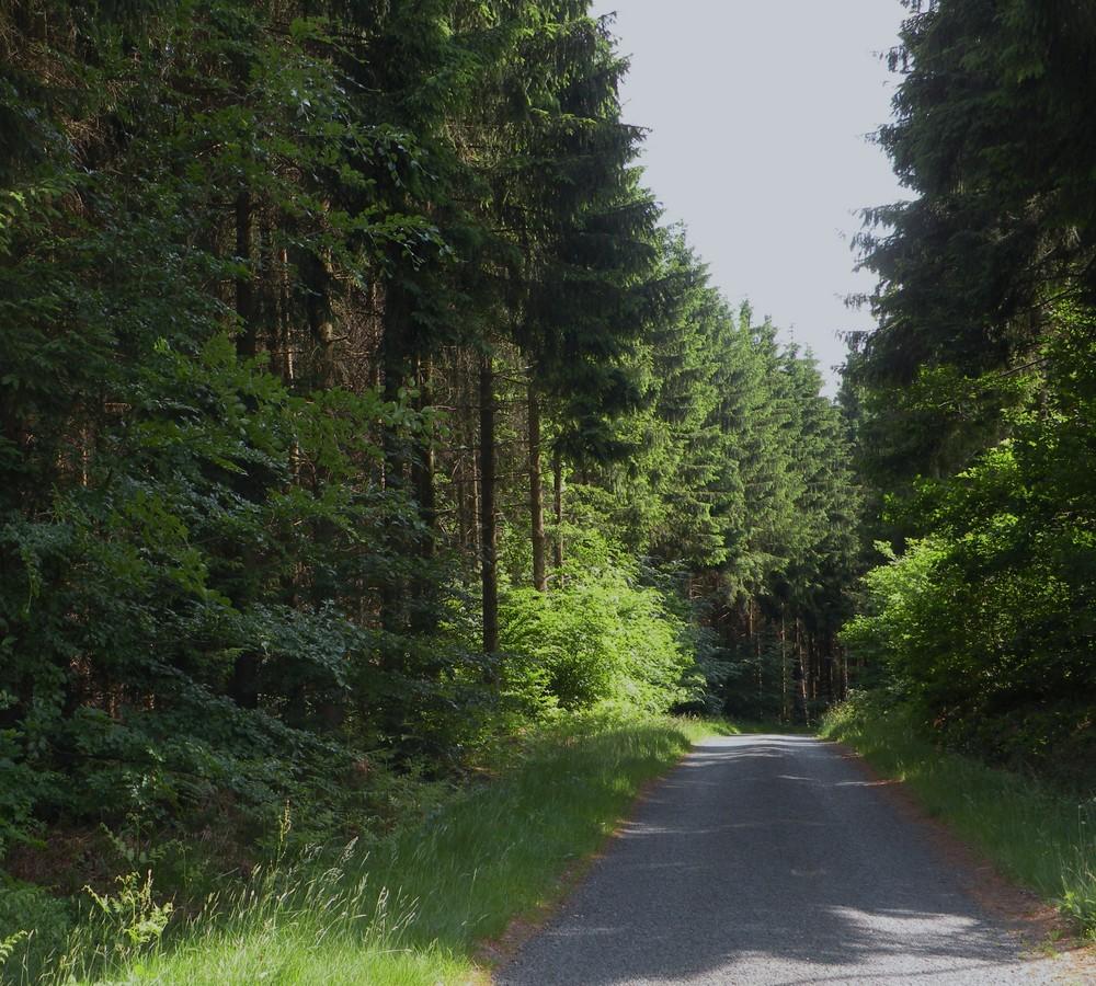 Forêt  vosgienne.