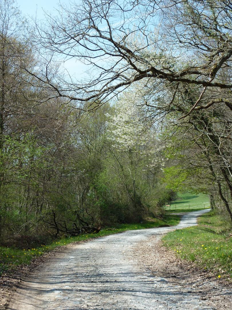 Forêts pyrénéennes (2)