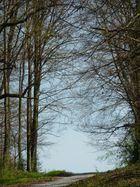 Forêts pyrénéennes