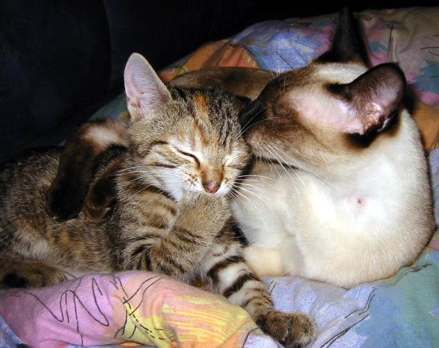 Fortuna und Sheela - Mutterliebe