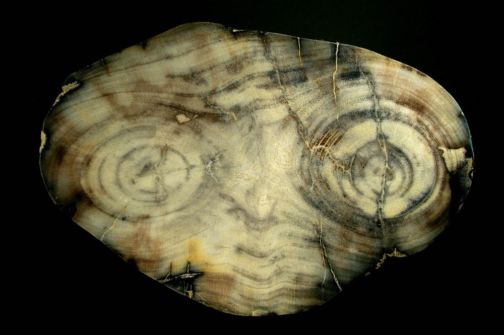 "fossiles tropisches Laubholz - Bild wie ""ET"""