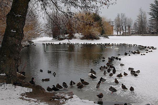 foto 4 (invierno)
