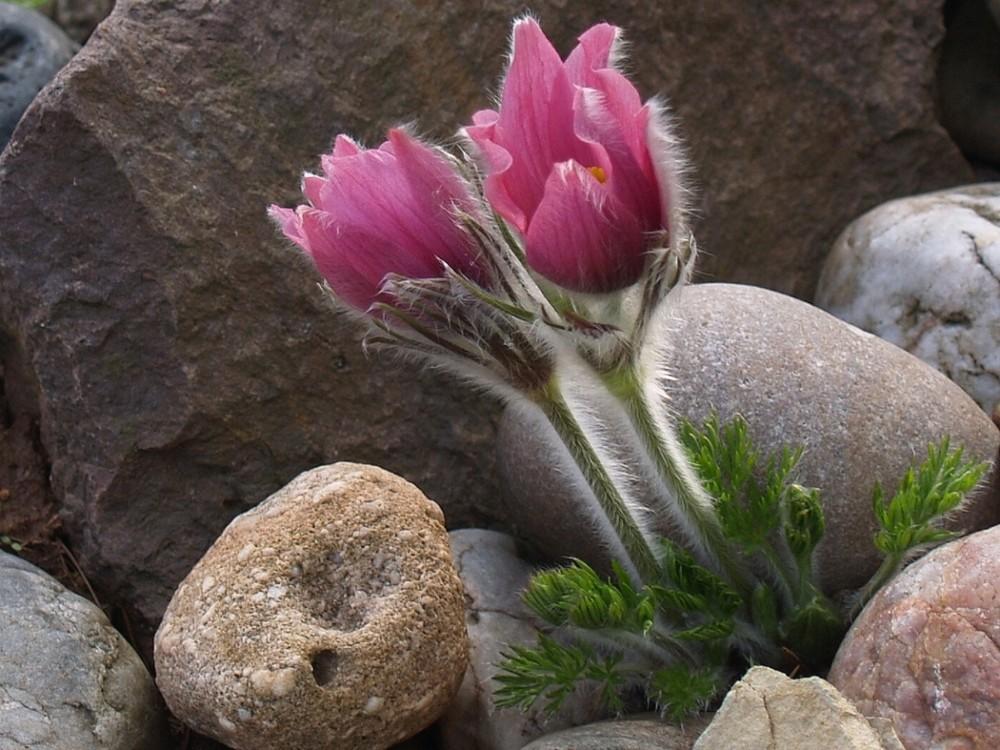 Foto aus mein Alpinum