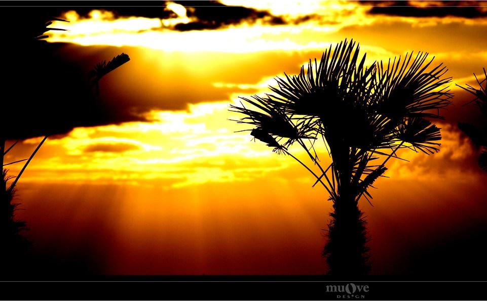 Foto Contest: Silhouetten