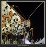 foto ritratto di una farfalla