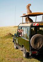 Foto-Safari Masai Mara