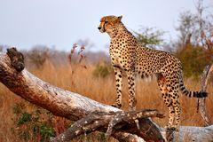 Foto- und Erlebnisreise -Südafrikas Tierwelt- Impression 001