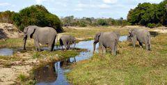 Foto- und Erlebnisreise -Südafrikas Tierwelt- Impression 002