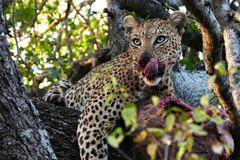 Foto- und Erlebnisreise -Südafrikas Tierwelt- Impression 004