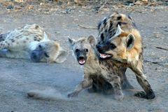 Foto- und Erlebnisreise -Südafrikas Tierwelt- Impression 005