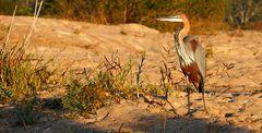 Foto- und Erlebnisreise -Südafrikas Tierwelt- Impression 006