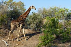 Foto- und Erlebnisreise -Südafrikas Tierwelt- Impression 007