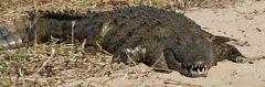 Foto- und Erlebnisreise -Südafrikas Tierwelt- Impression 008