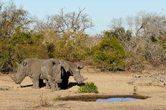 Foto- und Erlebnisreise -Südafrikas Tierwelt- Impression 009